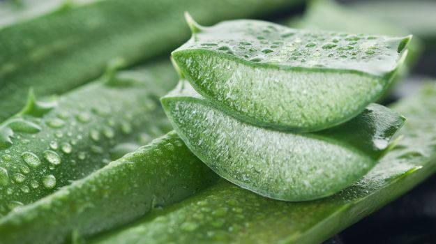 Does Aloe Vera Juice Help In Losing Weight